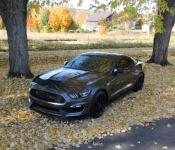Carol Grondin / Mustang GT 350 2016