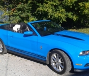 Martin Gaudreau / Mustang 2011