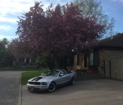 Mustang V6 4.0l / 2005